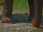 L'éléphant du cirque