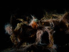 °°°Lembeh Horror Picture Show°°°