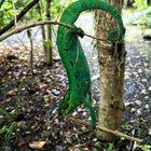 L'endormi,endémique à la Réunion
