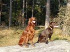 Leni und Sheila auf der Panzerwiese in Oberschleißheim