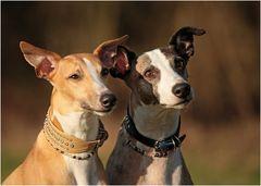 Lennox & Buddy
