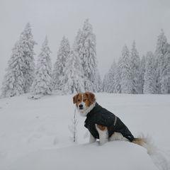 Lenny im Schneegestöber