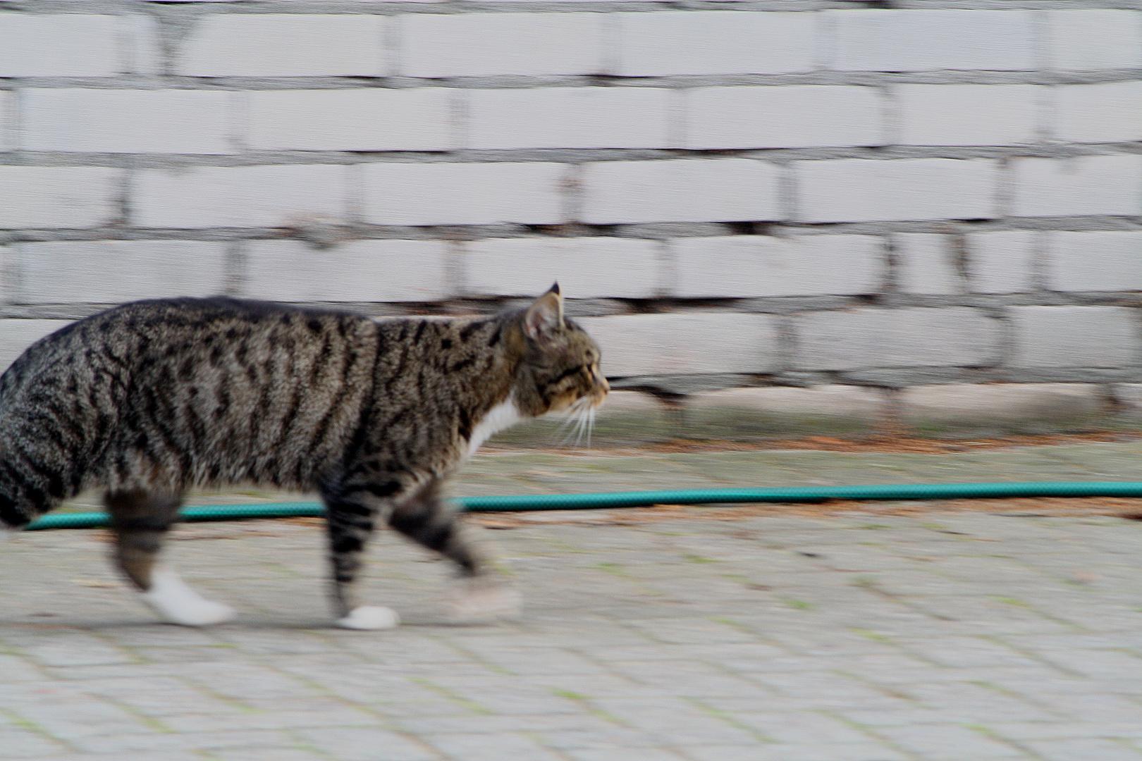 Lenny walking