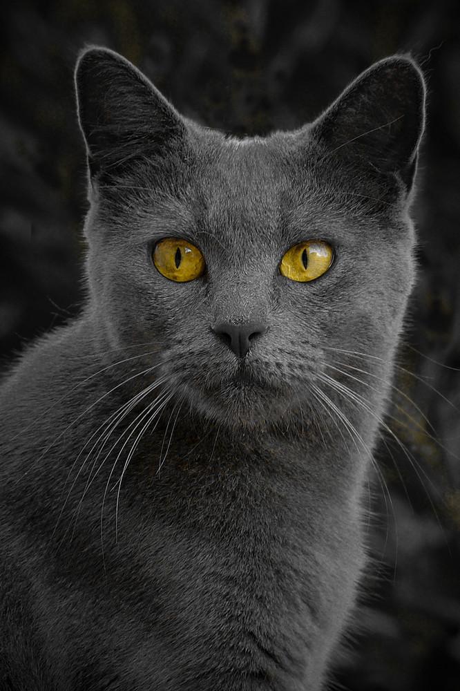 Léo le magnifique