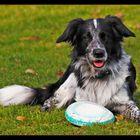 Leo liebt Frisbee