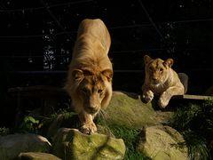 Leo und Azana