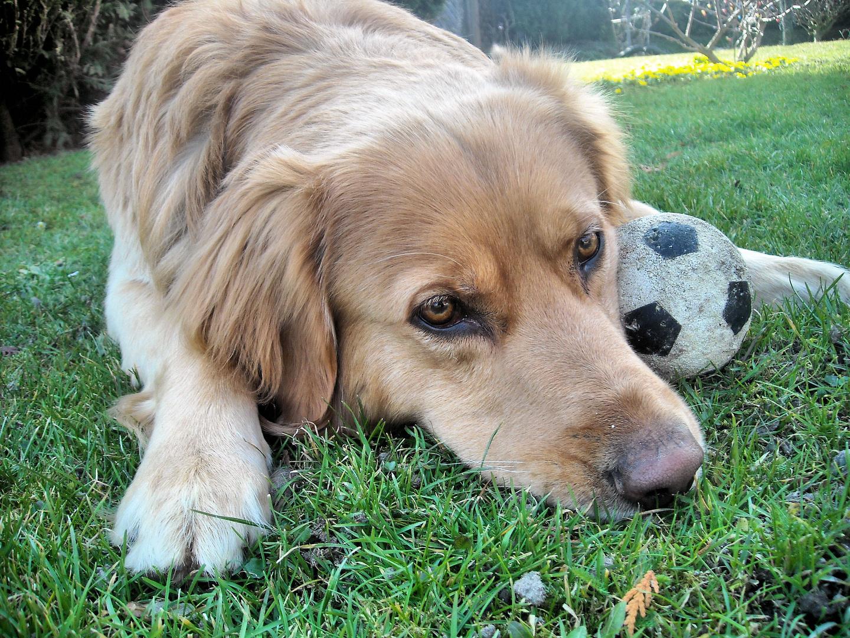 Leon und sein Ball