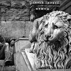 LEONI STANCHI /  TIRED LIONS