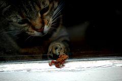 Leonie und die Kröte