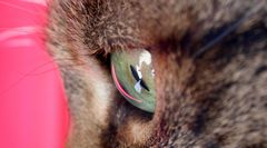 Leonies Auge