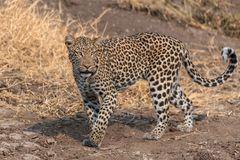 Botswana - Mashatu