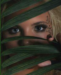 leopard :-)