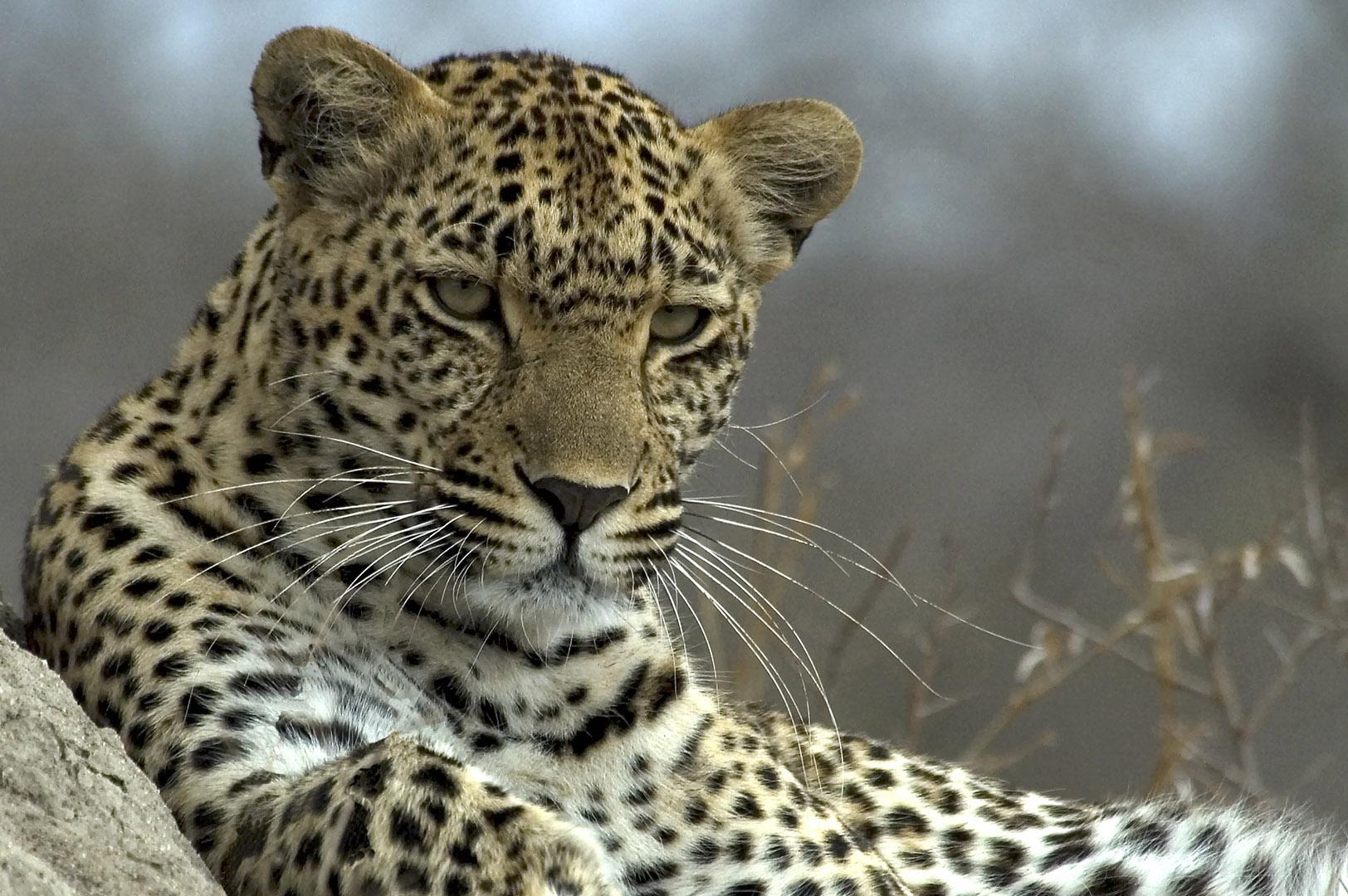 Leopard Djuma Reserve