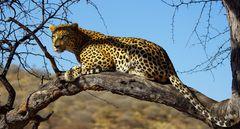 Leopard reloaded