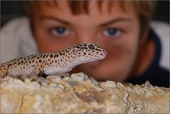Leopardgecko im Visier