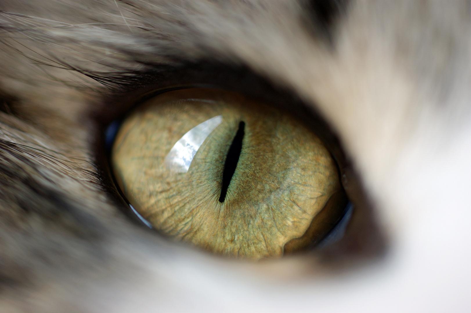 Leos Auge