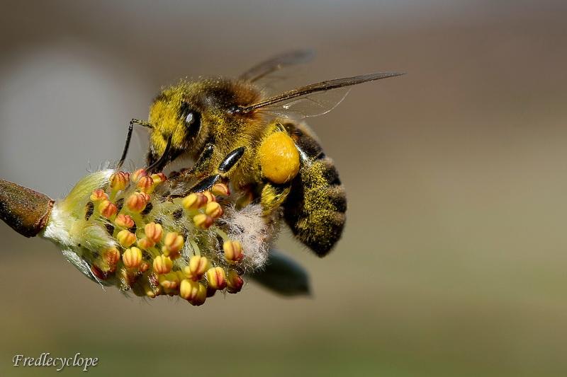 les abeilles commence à sortir.