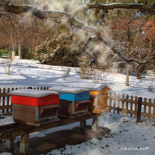 Les abeilles sont parties