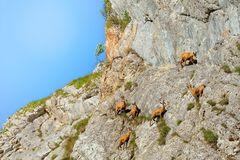 Les acrobates de la falaise