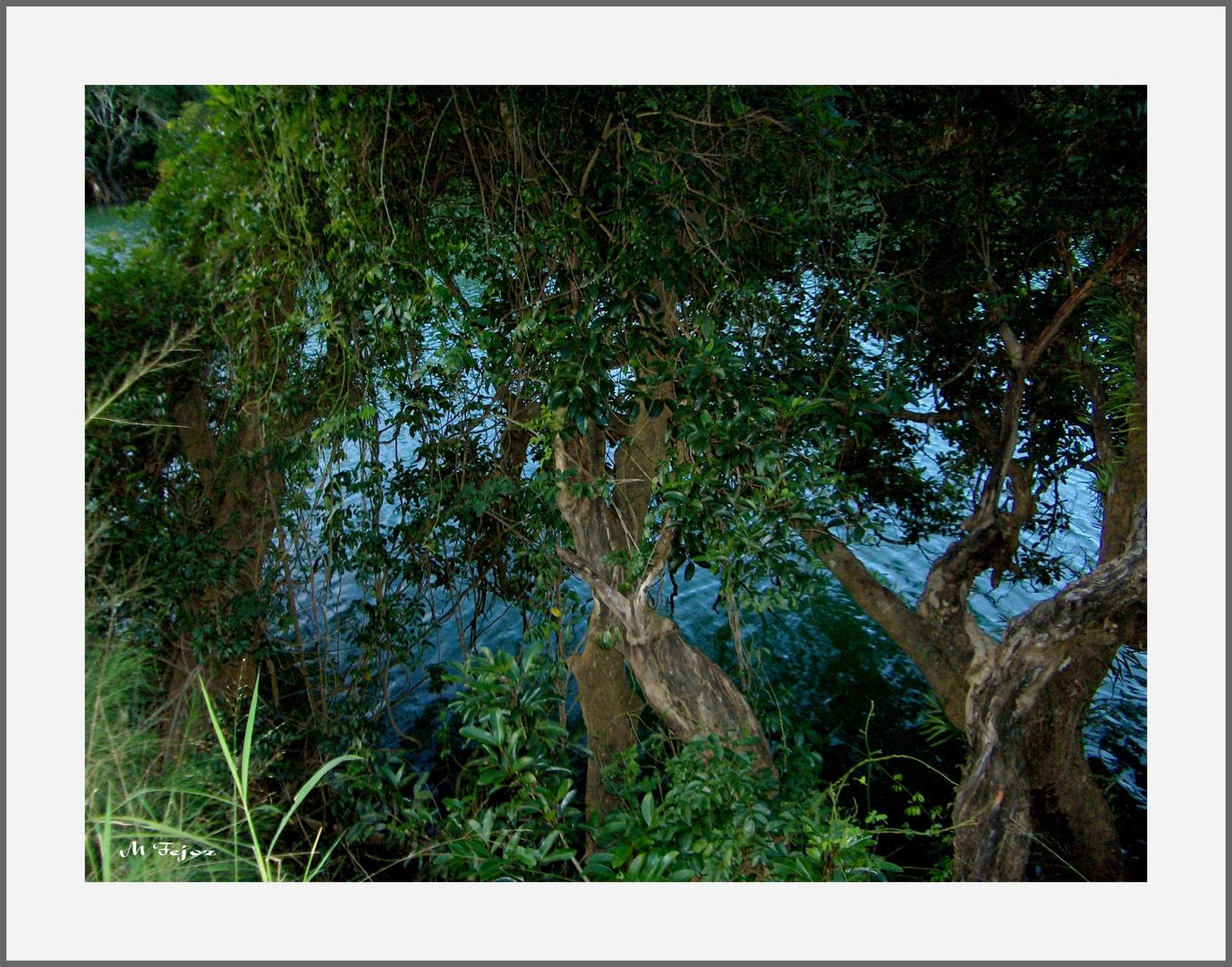 Les arbres dans la rivière