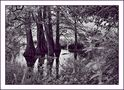 FR: Les arbres de l'eau by lorel79