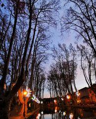 Les arbres dénudés