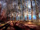 Les arbres et les ombres