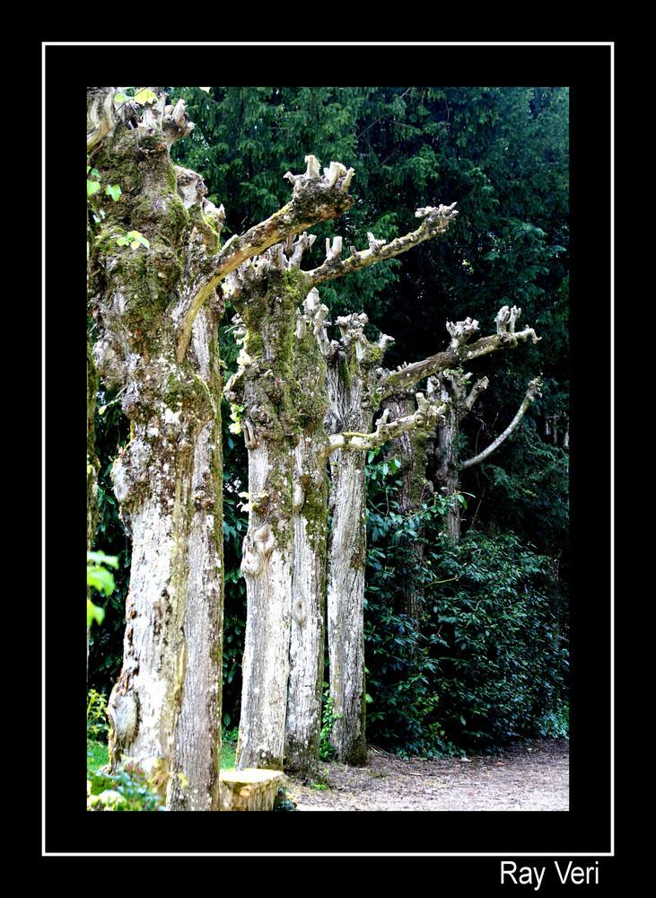 les arbres qui parlent