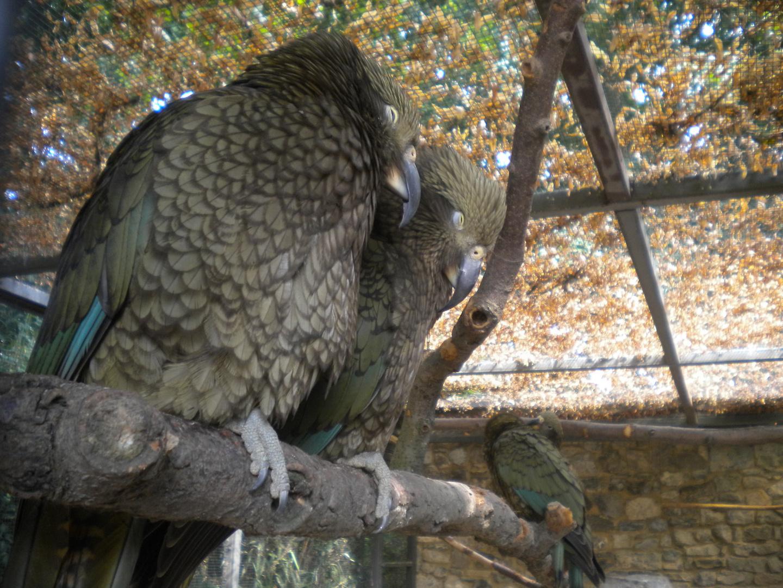 Les belles plumes font les beaux oiseaux.