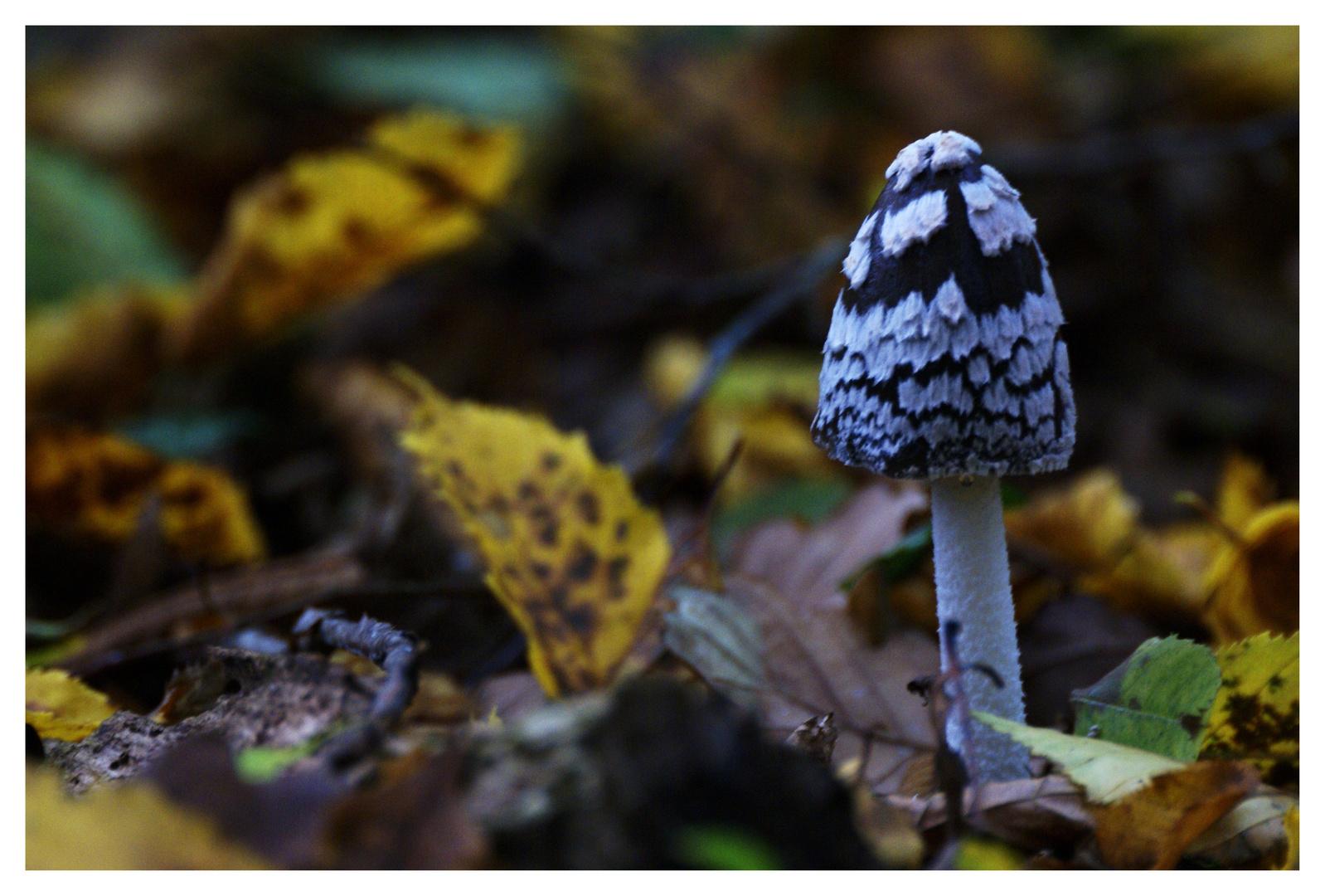 les champipi les champignons.....