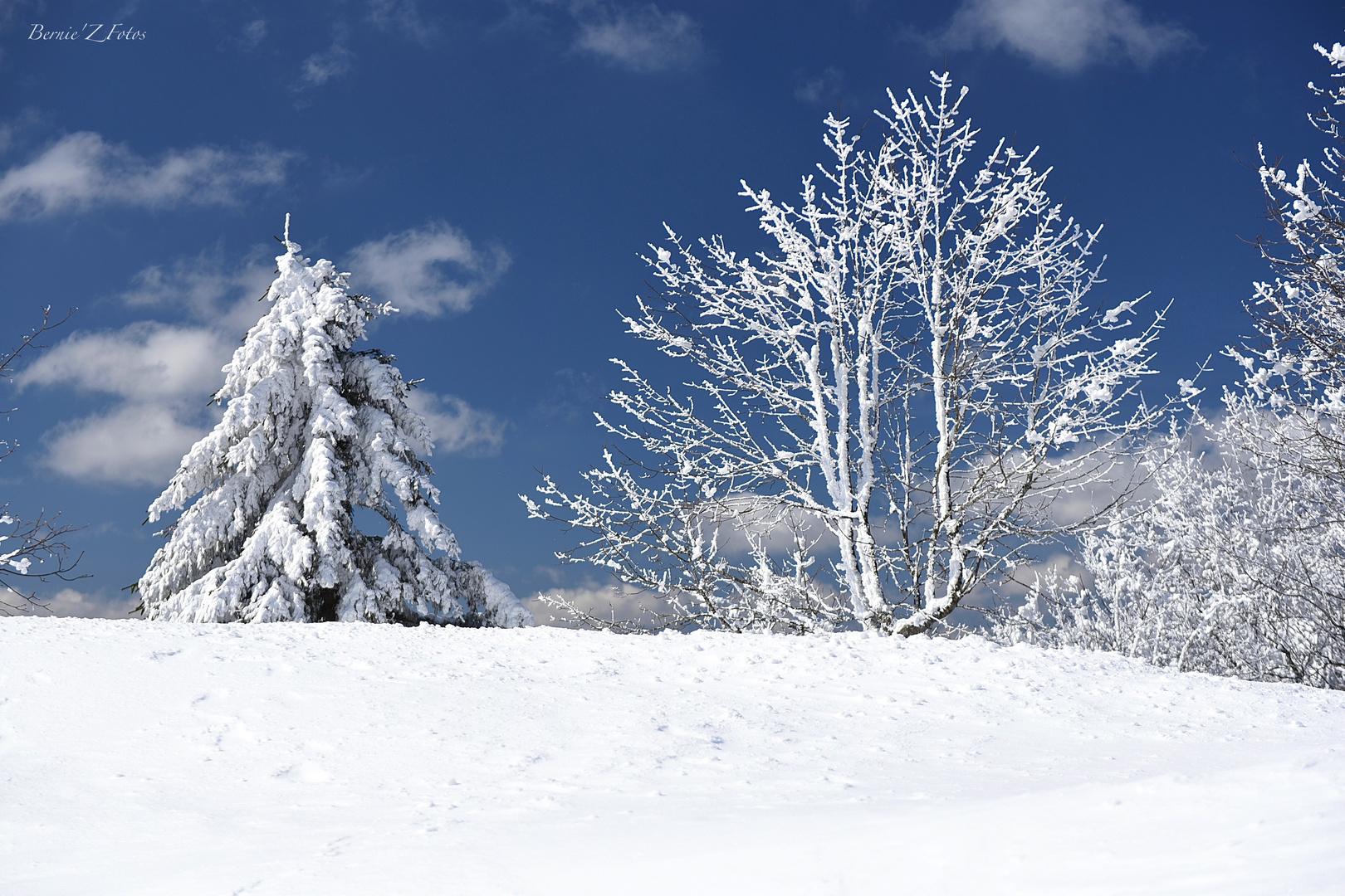 les charmes de l'hiver