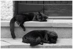 """les """"chats de sorcière"""" au repos avant ou après halloween!"""