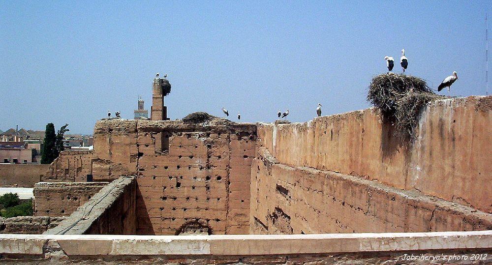 Les cigognes ont investi le Palais de la Bahia, Maroc