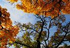 Les couleurs d'automne #3
