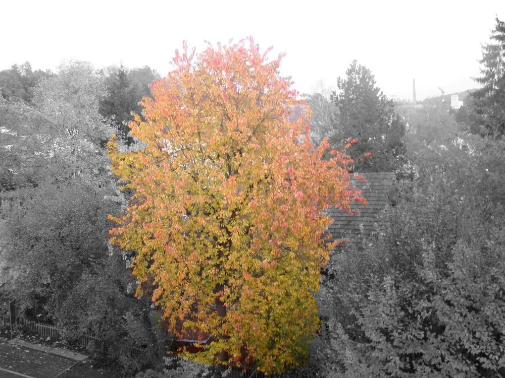Les couleurs d'automne