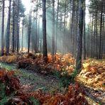 les couleurs de la forêt