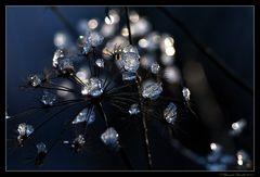 Les éphémères diamants d'hiver