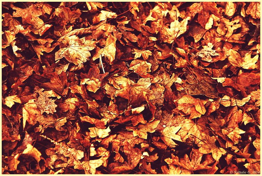 Les feuilles du bonheur....chanson de mon enfance!!!!The leaves of happiness .... song from my child