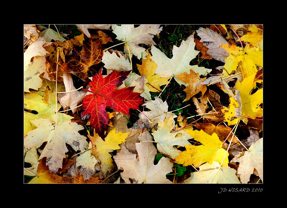 ....Les feuilles mortes se ramassent.......