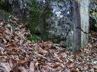 les feuilles ne se font pas mal en tombant