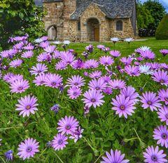 Les fleurs à Henvic