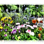 Les fleurs du lundi