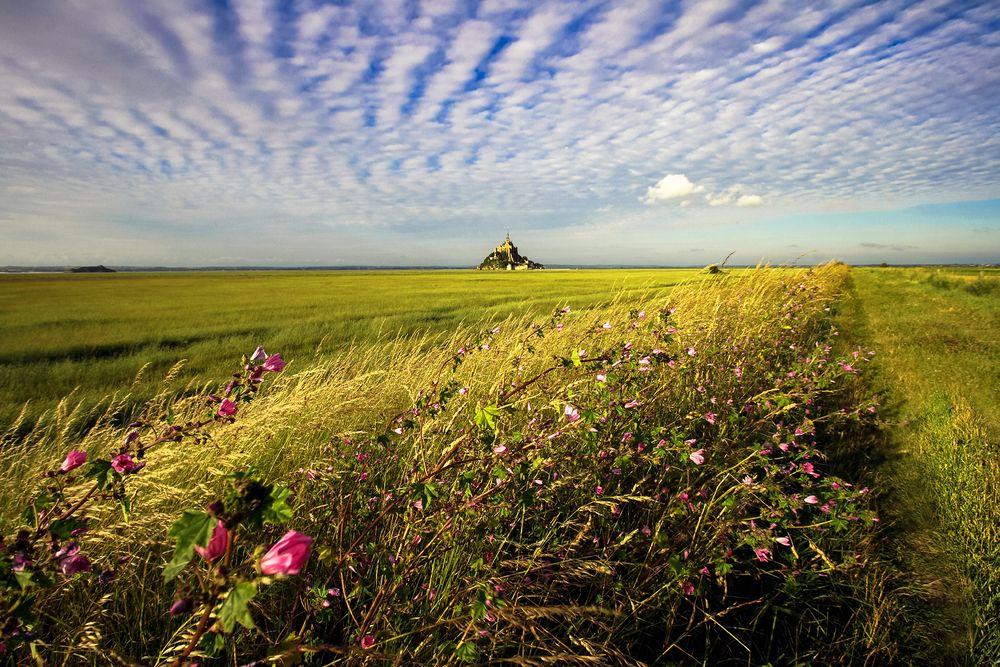 ~ Les fleurs du Mont Saint-Michel ~