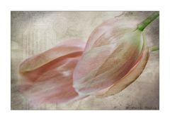 Les Fleurs du Printemps [3]