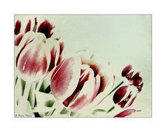 Les Fleurs du Printemps [5]