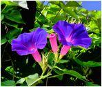 Les fleurs du week-end