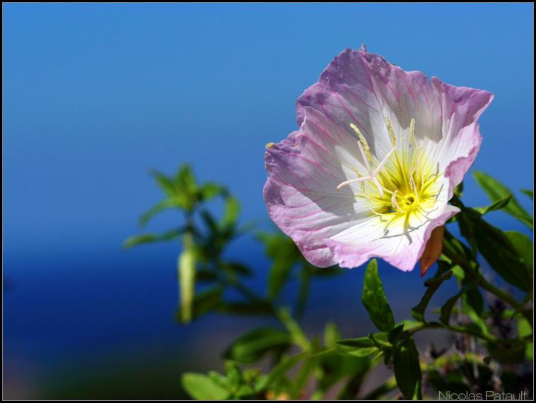Les fleurs, j'aime beaucoup en photo, mais pour l'identification... quelqu'un peut m'aider svp ?