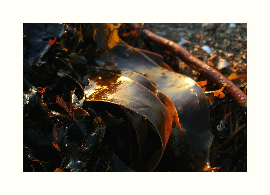 Les fruits de la mer...