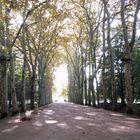 les jardins du chateau du chenonceau