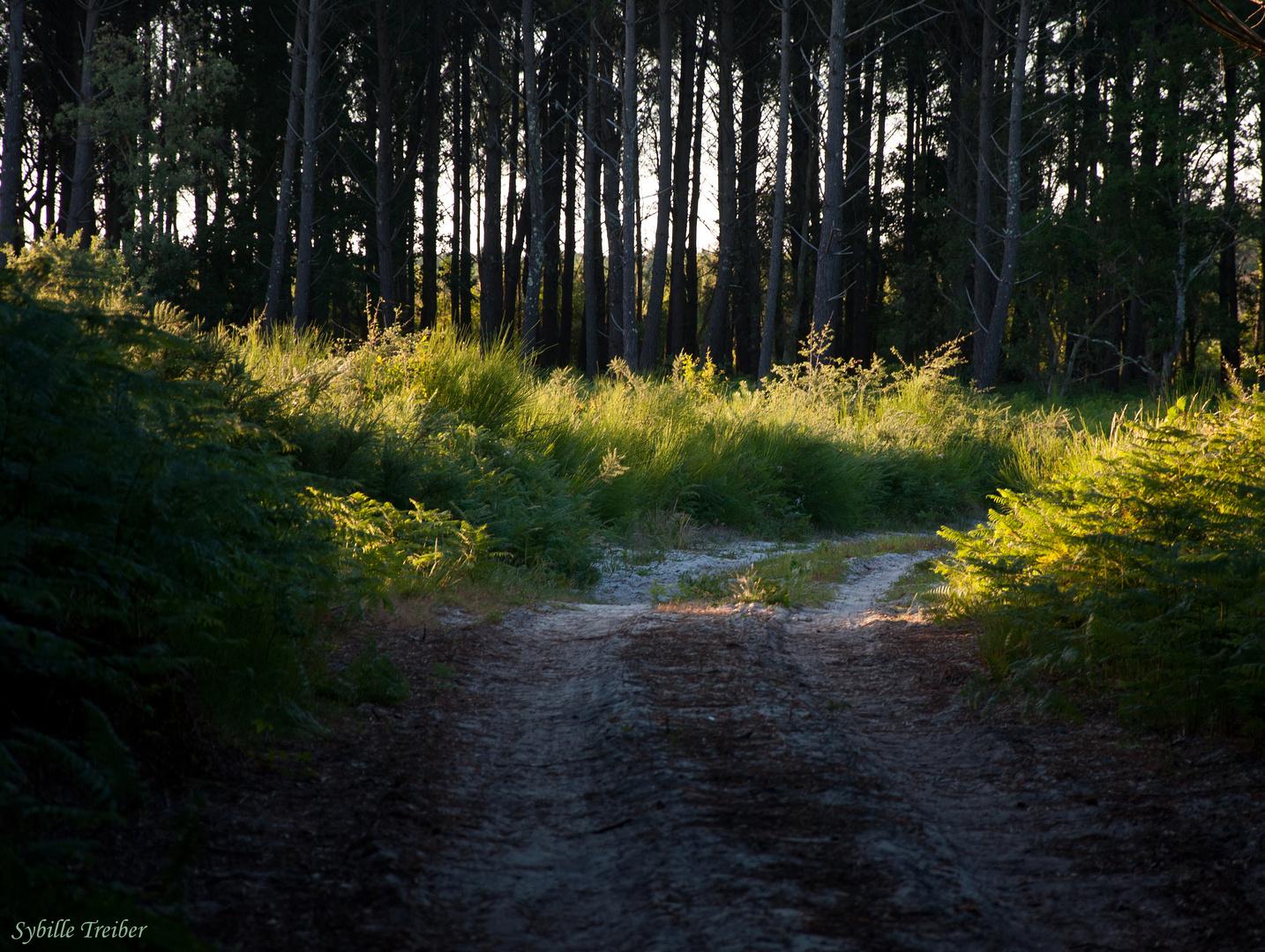 Les Landes - Der Wald